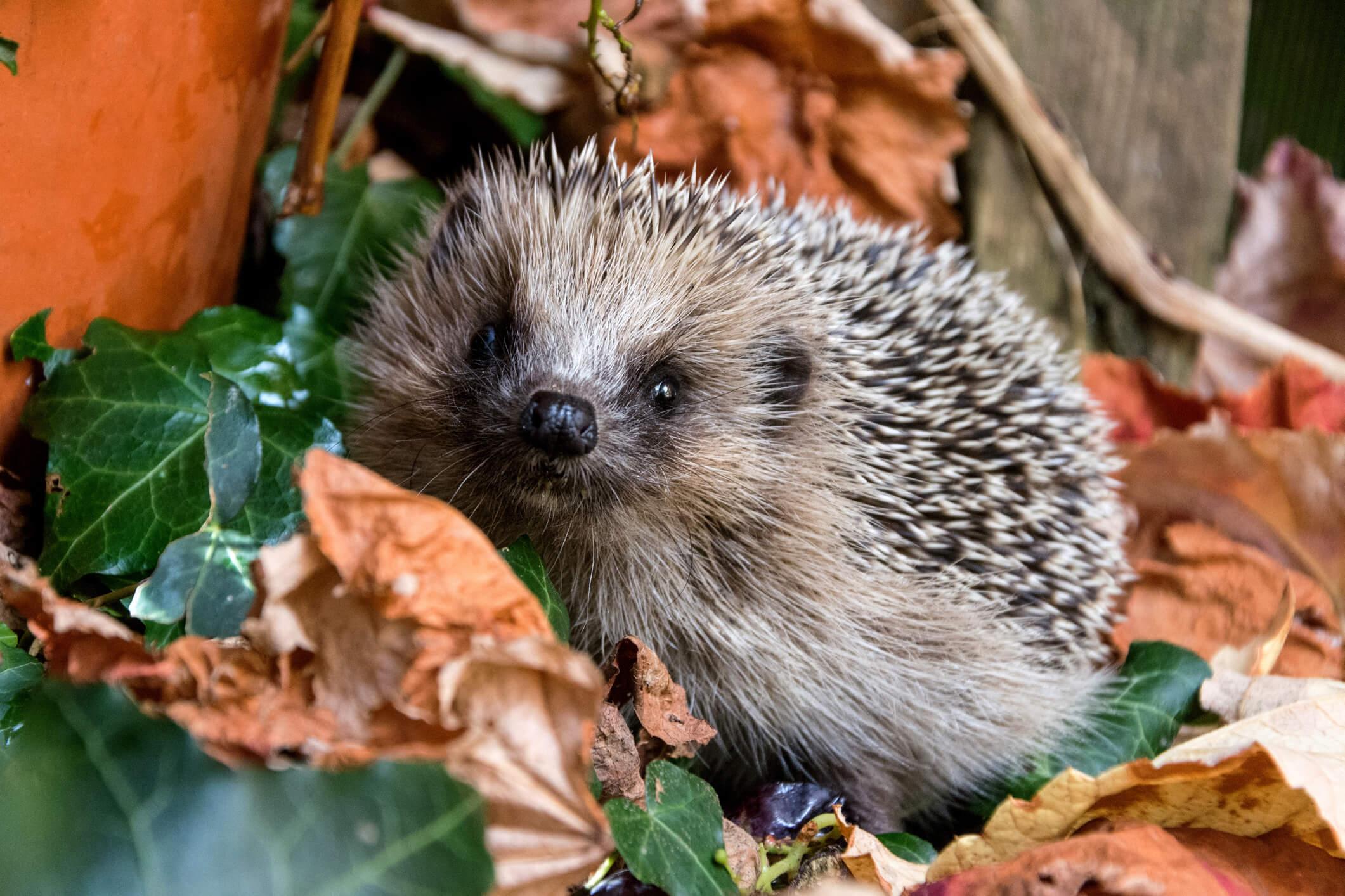 Eye Spy-ne: A Special Poem by Spike the Hedgehog.